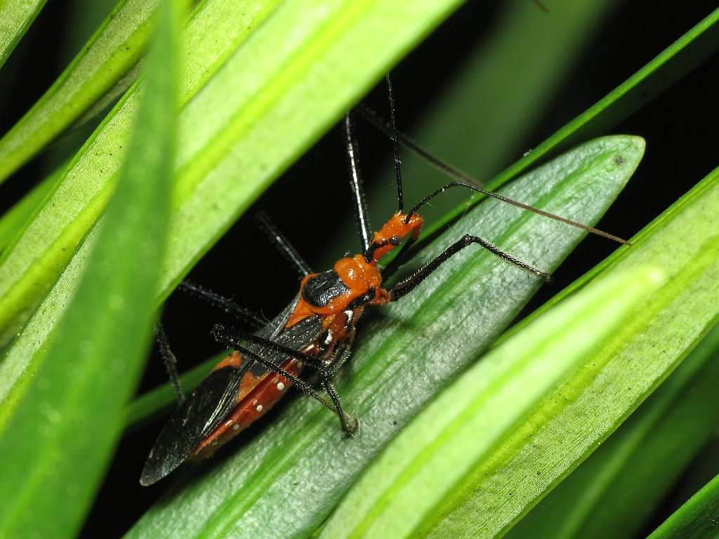 basic macro photography photographing insects